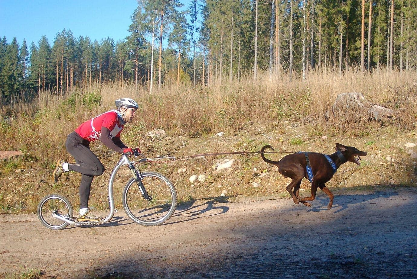 Dog-Scooter-Mushing-Hunde-Sport-Tretroller-Erwachsene